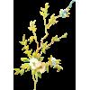 flower - Belt -