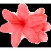 flower - Rastline -