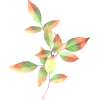 Flower Plants Colorful - Растения -