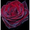 Flower Plants Red - Pflanzen -