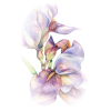 Flower Plants Purple - Pflanzen -