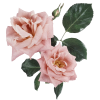Flower Plants Pink - Piante -