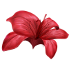Flower Plants Red - Plants -