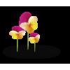 Flower Colorful Plants - Rośliny -