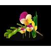 Flower Colorful Plants - Plants -