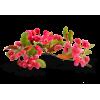 Flower Pink Plants - 植物 -