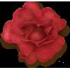 Flower Red Plants - Plantas -
