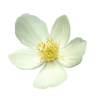 Flower White Plants - Plantas -
