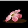 Flower Pink Plants - Biljke -