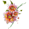 Flower Colorful Plants - Plantas -