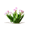 Flower Pink Plants - Plants -