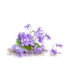 Flower Purple Plants - Piante -