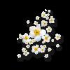 Flower White White Plants - Biljke -
