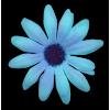 Flower Blue - Plants -