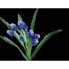 Flower Plants Blue - Plants -