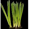 Flower Plants Green - Plants -