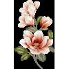 Flower - Rośliny -