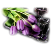 Flower Tulips - Plants -