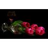 Flower Tulips - Plantas -