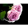 Flower Rose - Plantas -
