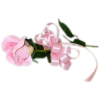 Flower Rose - Biljke -