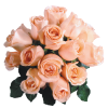 Flower Rose - Plants -