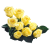 Flower Rose - Pflanzen -