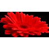 Flower - 植物 -