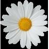 flower - Предметы -