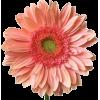 flower - Items -