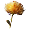 flower - Items -