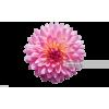 flower - Nature -