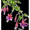 flower - Растения -