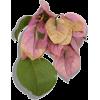 flowera1 - Rastline -