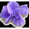 flowera3 - 植物 -