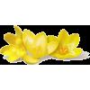 flowera5 - Plants -