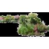 flower bed - Plants -