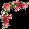 flower corner rose - Plants -