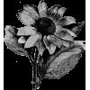 flower illustration - Uncategorized -