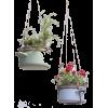 flowerpots/pans photo: Rolinda Windhorst - Plants -