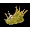 flowers, plant, fiori, pianta, grass,  - Biljke -