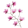 Flowers Pink - Plantas -