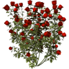 Flowers Plants Red - Biljke -