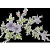 Flower Purple Plants - Plants -