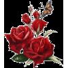 Flower Red Plants - Biljke -