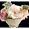 Flower Beige Plants - Plantas -