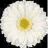 Flower White Plants - Plants -