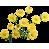 flowers - Articoli -