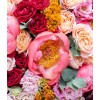 flowers - Priroda -