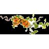 flowers - Narava -